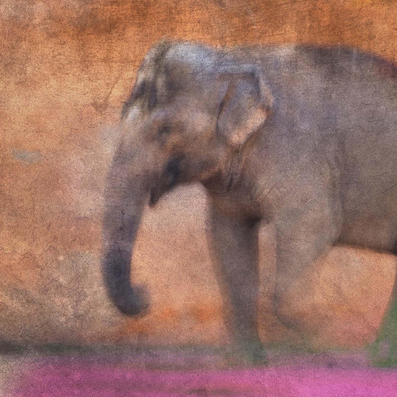 Voeux d'Artistes - Éléphant - Photographe Paul-Louis LEGER Marseille