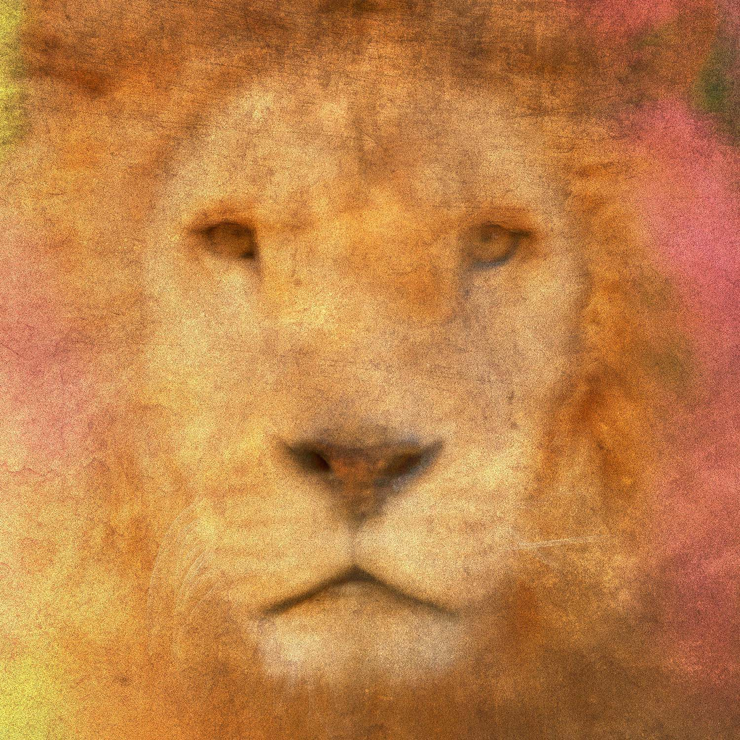 Voeux d'Artistes - Lion - Photographe Paul-Louis LEGER Marseille